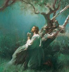 Cómo Jesucristo nos salva